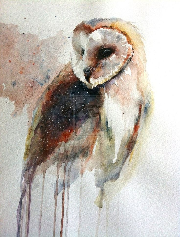 A beautiful water color painting of a English Barn Owl.