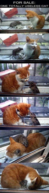 Kotě nejlepší kouření