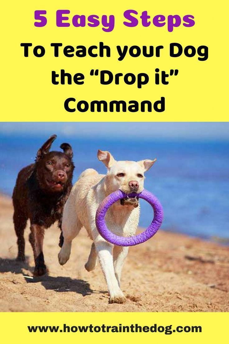 Self Disciplined Scheduled Dog Training For Obedience Please See