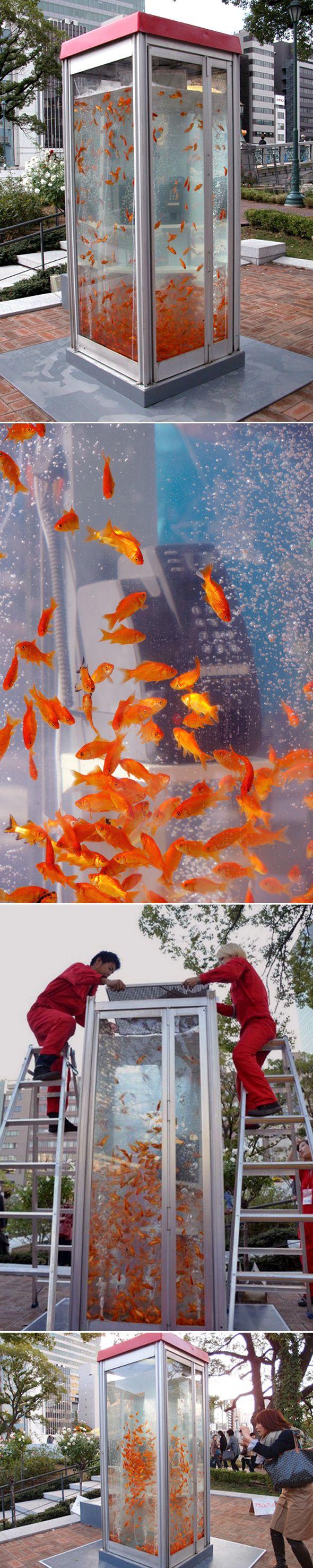 Le collectif de jeunes artistes japonais baptisé «Kingyobu» est à l'origine de cette transformation d'une cabine téléphonique en aquarium géant.  Pour les personnes nées après 1995, les cabines téléphoniques étaient ce genre de boîtes de verre où l'on pouvait téléphoner grâce à quelques pièces. Mobilier urbain totalement abandonné, le collectif a décidé de lui donner une nouvelle fonction et une seconde vie.