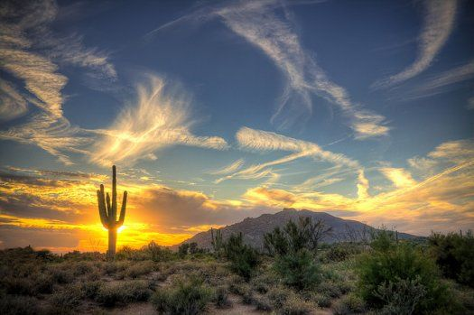 Desert Landscape  Photo by Jason Corneveaux: Green Living Tips, North America, Desert, Favorite Places, Tucson Arizona, Beautiful, Saguaro National Parks, Sunri Sunsets, Sunrises Sunsets