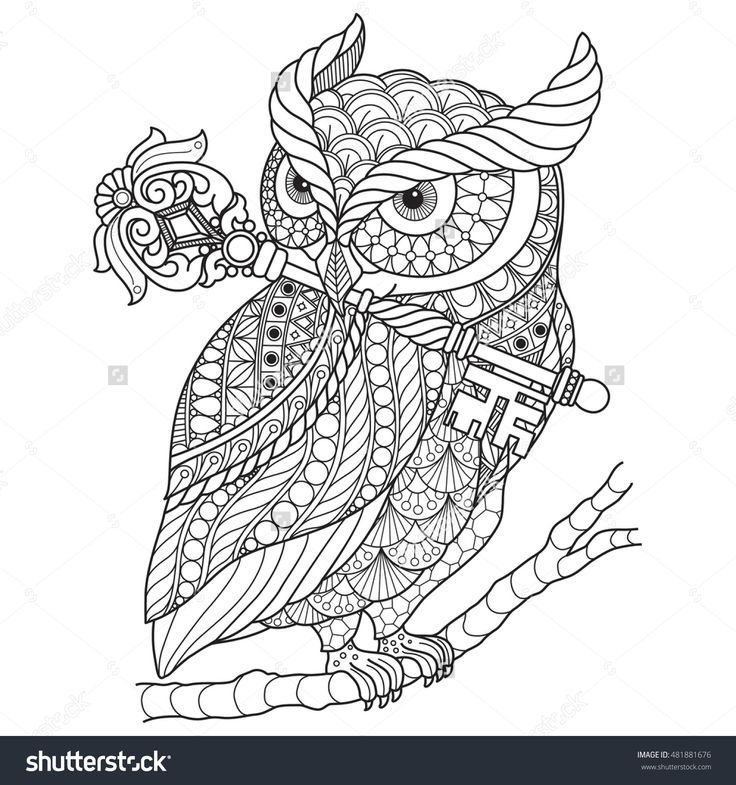 Hand Drawn Gorgeous Owl For Color Book Adult Other Decorations Isolated On White Background