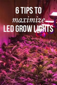 6 tips to maximize LED grow lights | MassRoots.com