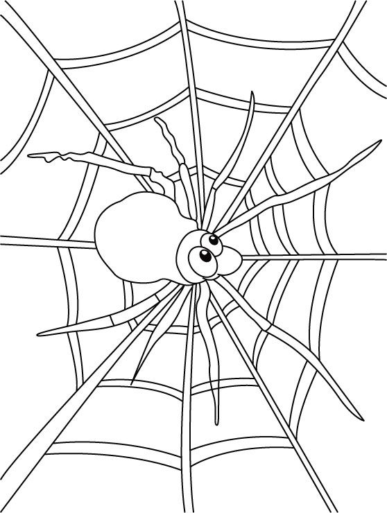 270 Best Autumn Coloring Pages Images On Pinterest Fall Spider Web Color Template