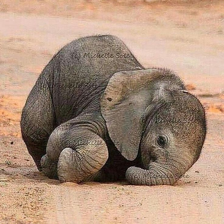 """""""Baby Elephant, photo by ©Michelle Sole"""""""
