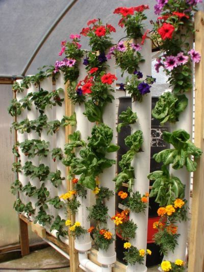 """Vertical gardening in PVC pipes.  Footprint is only about 8"""" by 4'. Good for community garden maybe."""