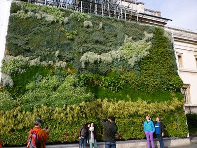 Vertical Green Wall in London is Flourishing After 4 Months