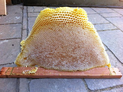 Two and a half kilograms of honey on the hoof. (Yes, this is ours! From our bees!): Bees Industrial, Bees Hives, Bees Uti, Bees Building, Bees Things, Enjoying Honey, Bees Knee, Bar Bees, Honey Bees