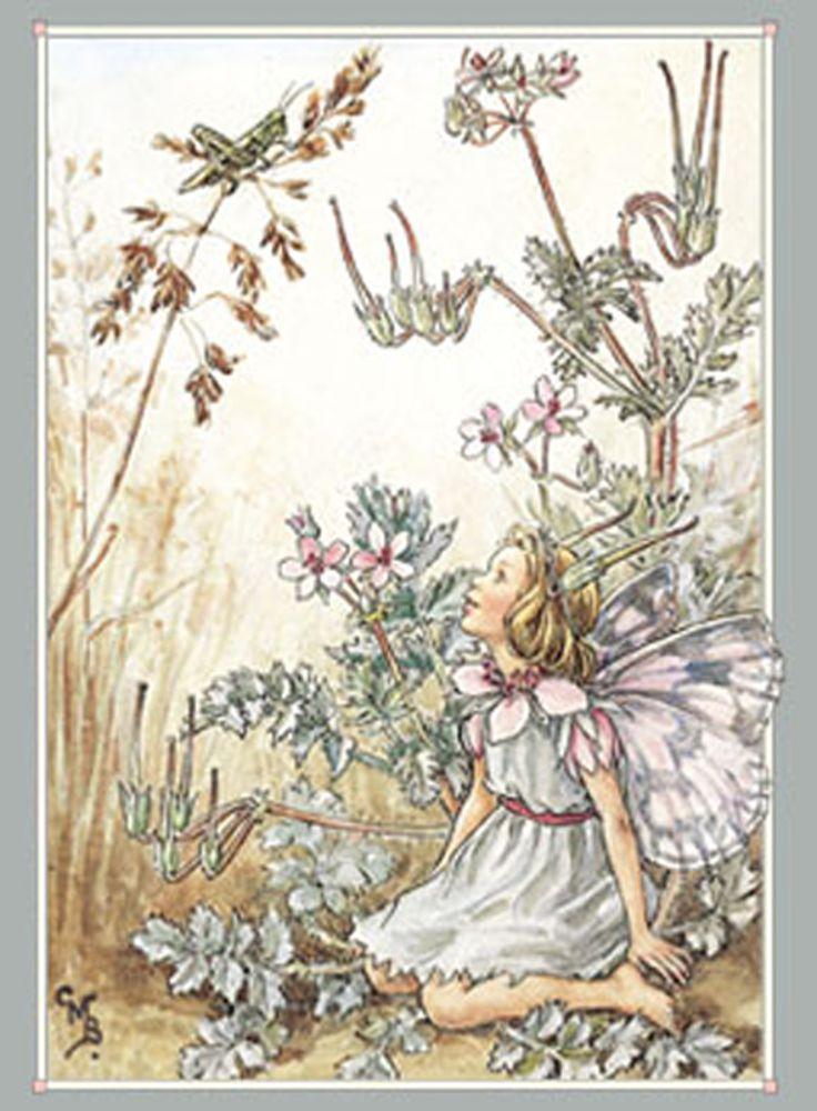 Flower Fairies - | blomster billeder | Pinterest ...