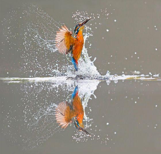 The Best Kingfisher Ideas On Pinterest Kingfisher Bird - Man finally captures the perfect kingfisher photo after 6 years and 720000 attempts