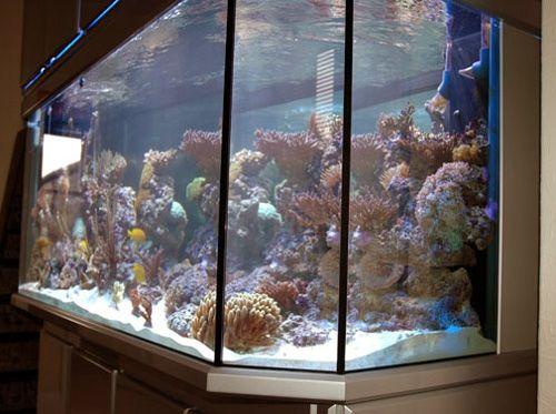 40 best images about unique aquariums design ideas on for Fish aquarium supplies