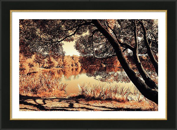 Jenny Rainbow Fine Art Photography Framed Print featuring the photograph Miracle. Airy Lace Of Autumn by Jenny Rainbow