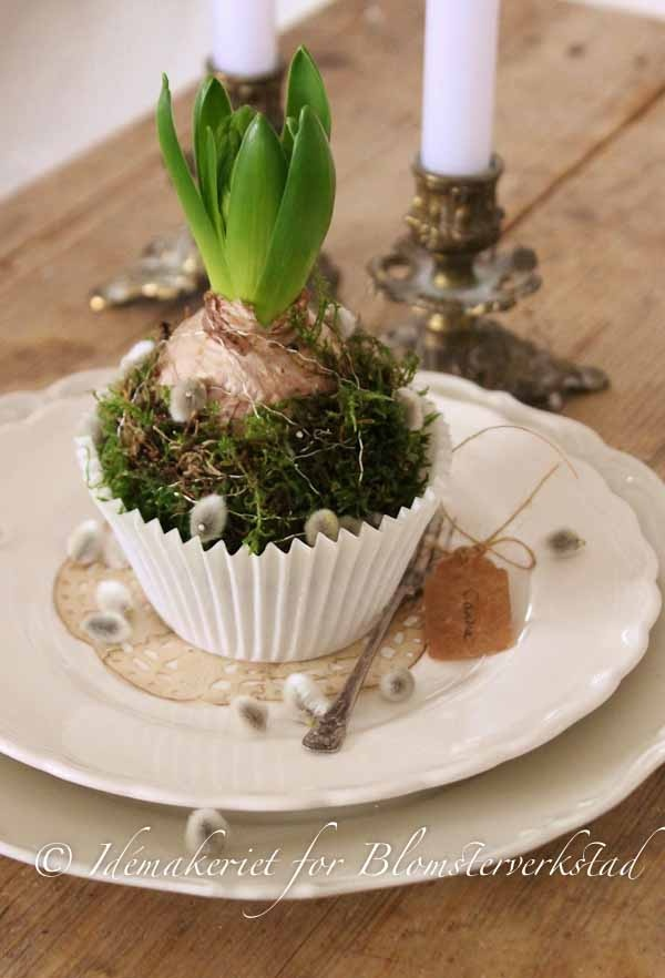 Hyacinth in cupcake liner with moss and Pussy Willow from Blomsterverkstad, symbolizing the new year.