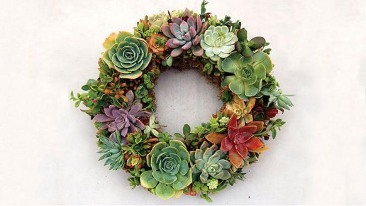 Homelife - How To Make A Succulent Wreath