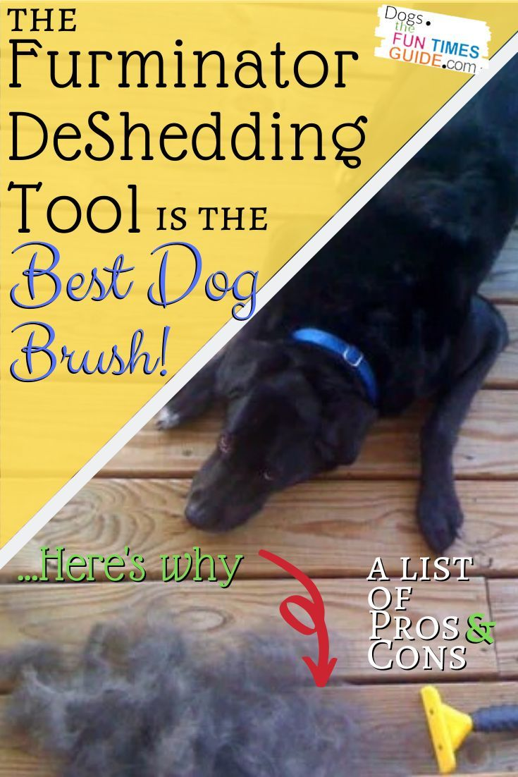 Looking For The Best Pet Brush See Why So Many Dog Owners