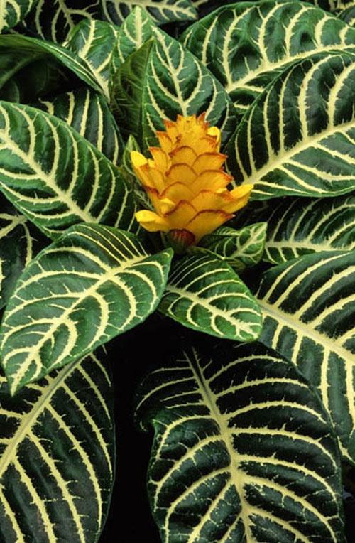 17 Best images about Floral Design Plant ID on Pinterest ...