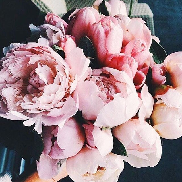 Pretty flowers petals // Follow (@RomaStyled) for more
