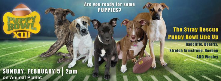 Some local VIPooches will be playing in the Animal Planet Puppy Bowl! You can join the puppy bowl challenge and support Stray Rescue of St. Louis.