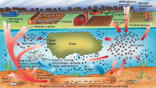 رسم توضيحى يتكلم عن تلوث المياه