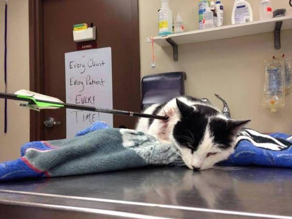 Norwich, CT: INFORMATION SOUGHT: Cat Shot