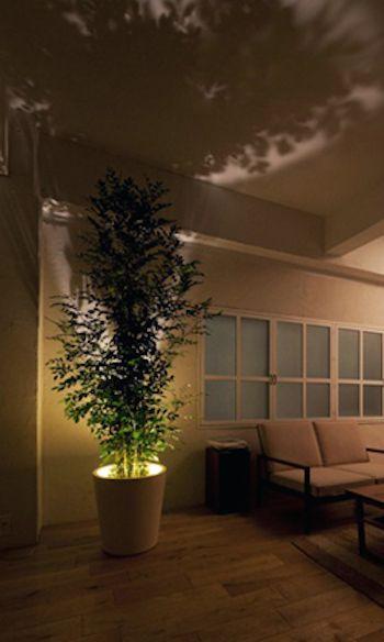 底面部分にLED電球が内蔵されたプランター。 真下から植物を照らすことで、天井や壁に影が映り幻想的な空間に。