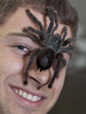 Pet tarantula on face - photo#3
