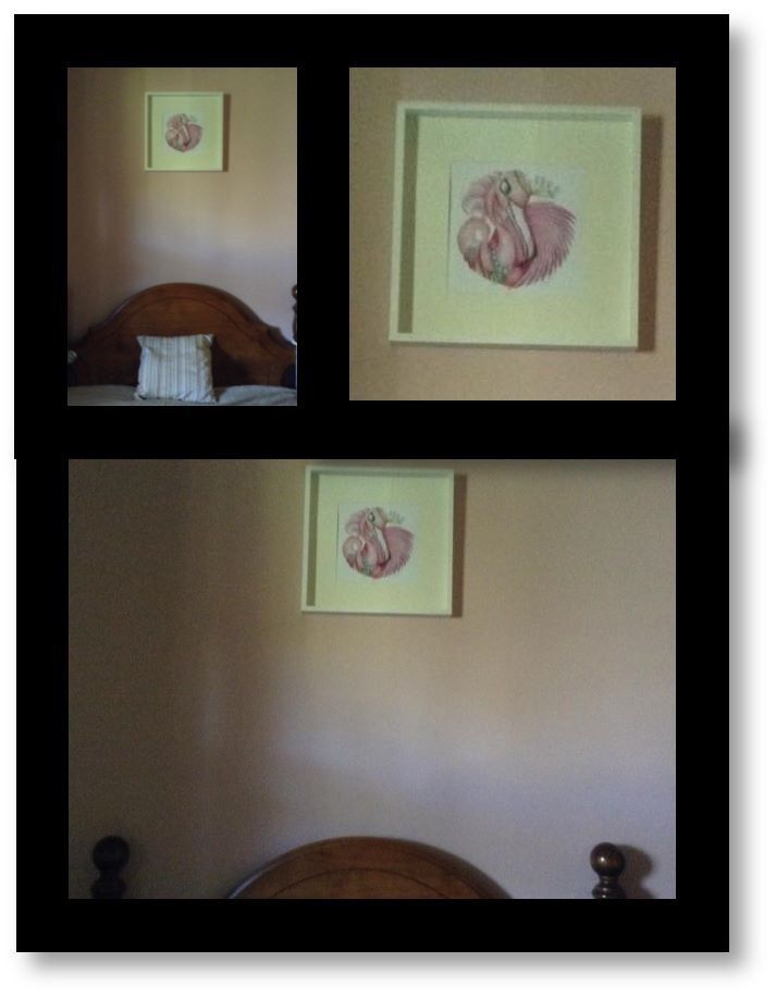 Fancy as a print in a happy customers home.  She was redecorating and had already chosen the pink wall colour when she spotted Fancy.  It was love at first sight!