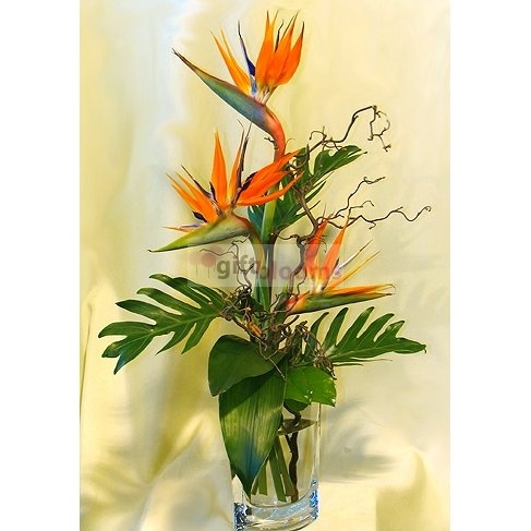 Tropical birds  Price:  US$65.99  Exotic strelizias in a spectacular bouquet. Available in two sizes. Only to Budapest!