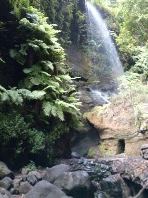 Wasserfall Los Tilos, La Palms