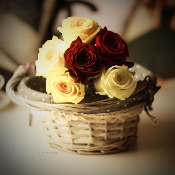 آنثئ برآئحة الورد 💐.  الورد آولآ ثم الورد ثم القهوه ثم الصور ☕️🌹📸.  الاحسآء .