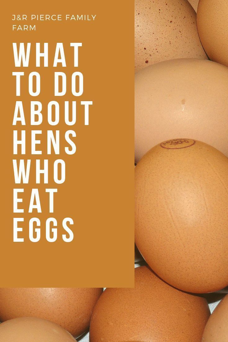 Tips to Stop Your Hens From Eating Eggs  – Raised Bed Gardening