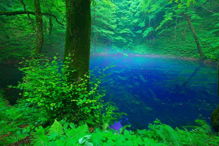 十二湖 青池 Ao Ike