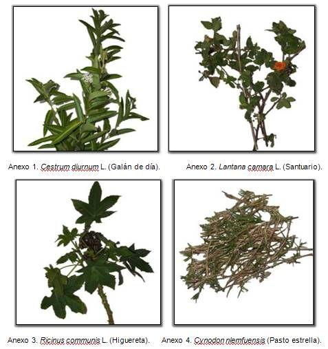 17 best images about plantas venenosas on pinterest wisteria blog and salud - Plantas ornamentales venenosas ...