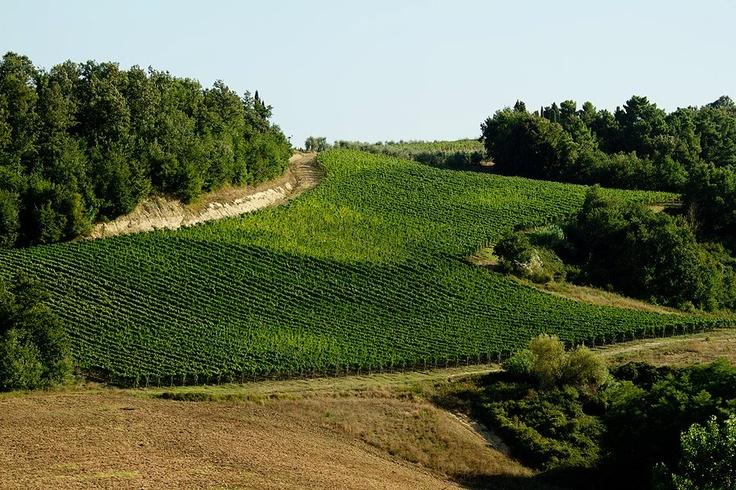 landscape_fattoria_fibbiano