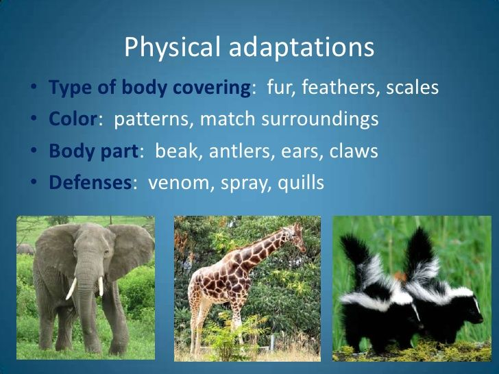 top 10 animal adaptations Different animals animal adaptations -- vocabulary adaptation a body part, body covering, or behavior that helps an animal survive in its environment behavior the actions of an animal camouflage a color or shape in an animal's body covering that helps it blend into its environment.