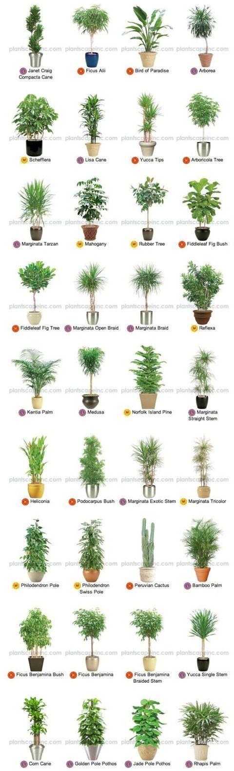 home plants flowers inspiration 4