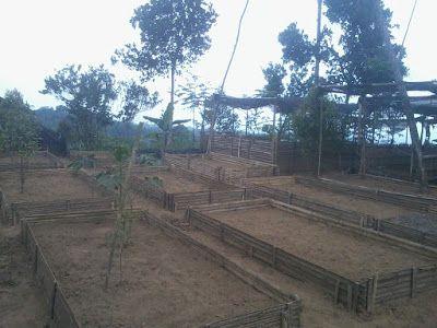 SECELENG: Persiapan Media Tanam Jahe Menggunakan Pagar Bambu...