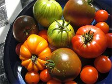 Heirloom Tomato Plants: What Is An Heirloom Tomato  Has a couple of web sites to find heirloom tomatoes.