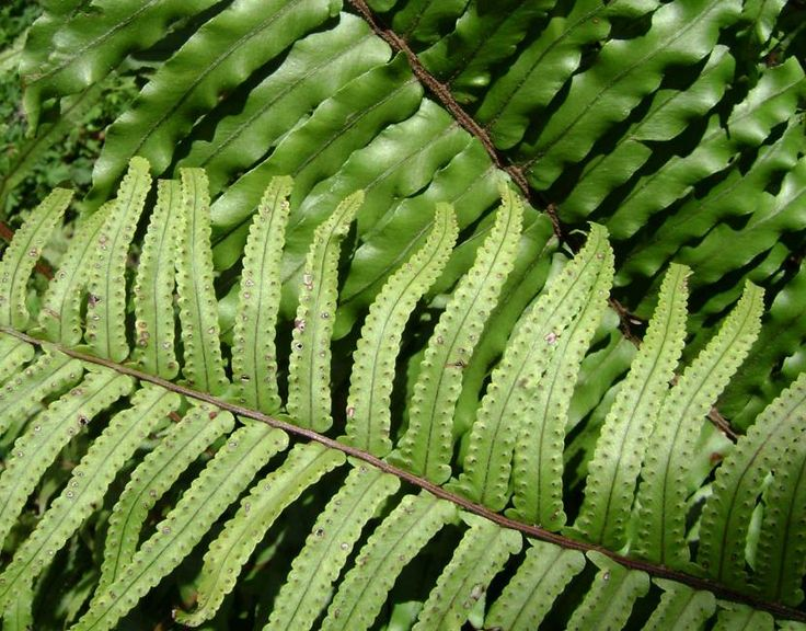 Helechos plantas perfectas para decorar tu hogar http - Plantas interior resistentes ...