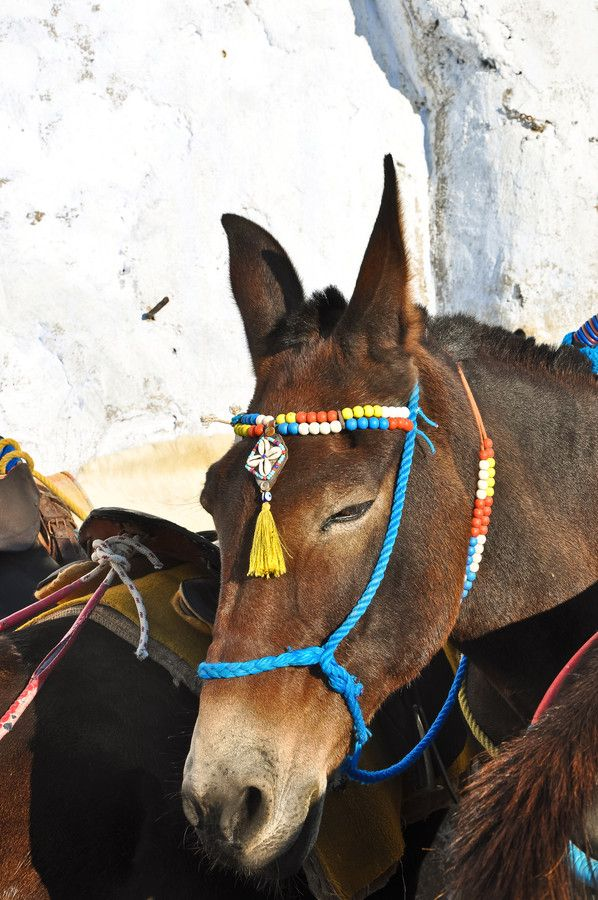 Colorful Mule - Santorini/Fira/Oia (from #luisdehoyos at www.500px.com/dhclicks )