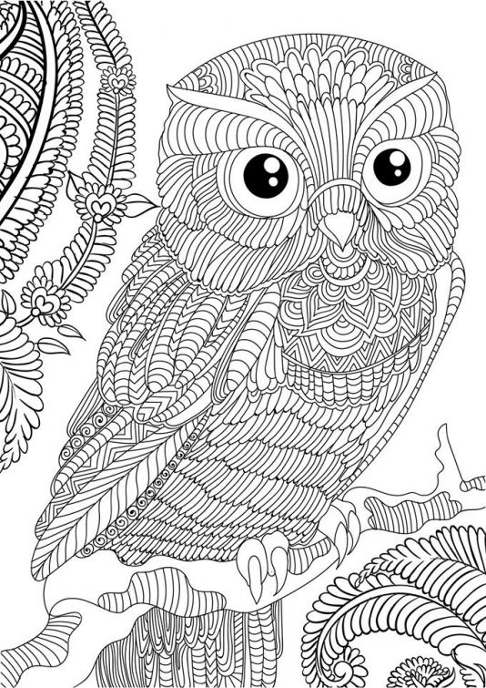 Difficult Owl Adults Printable Coloring Page Free Owl