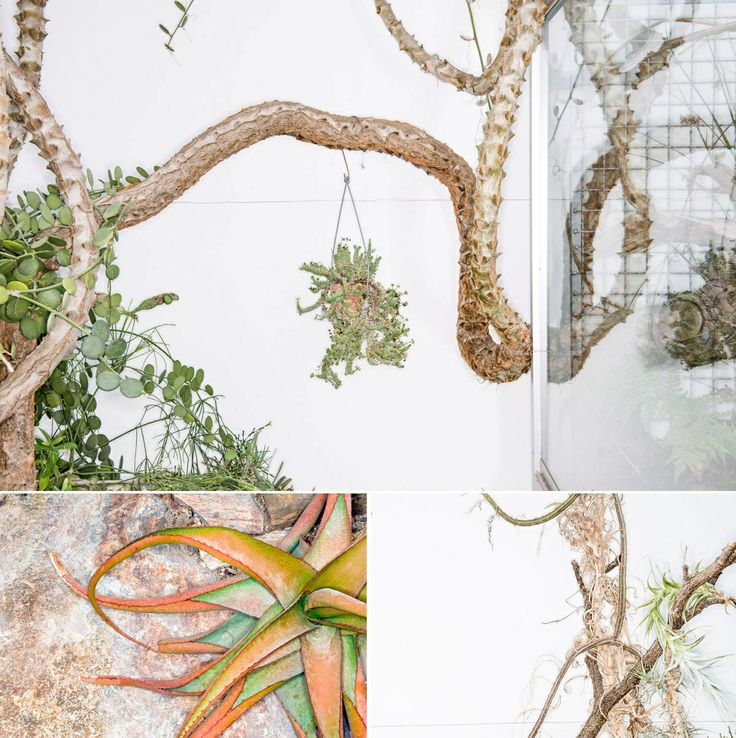 85 best Bäume images on Pinterest | Planting flowers, Backyard ideas ...