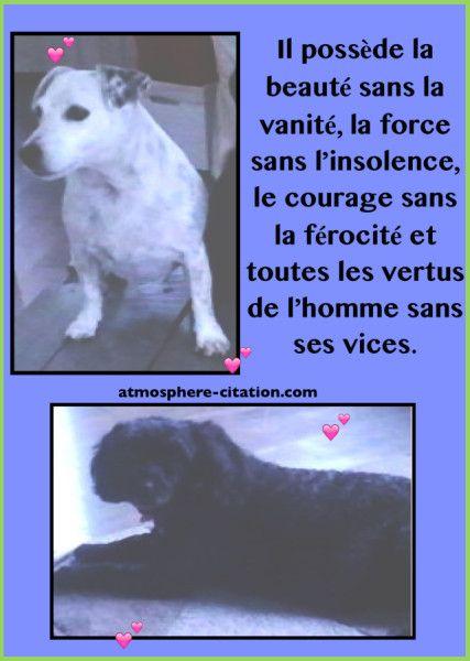 Tout ce qu'il faut savoir sur les chiens...  Trouvez encore plus de citations et de dictons sur: http://www.atmosphere-citation.com/animaux/chien-maladie-amour-adopter.html?