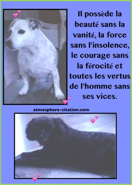 Tout ce qu'il faut savoir sur les chiens...  Trouvez encore plus de citations et de dictons sur: http://www.atmosphere-citation.com/animaux/chien-maladie-amour-adopter.html?