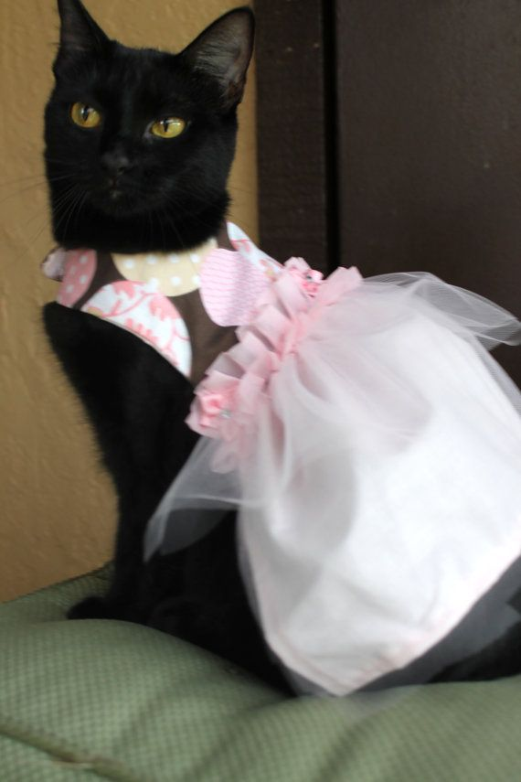 Pink Cat Dress Clothing For Wedding Flower Fashion Pinterest Dresses Cats And