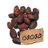De bonen worden gedroogd en vervolgens gefermenteerd, om te gebruiken als basis voor de bereiding van chocolade, mole saus, tejate en cacaoboter. De cacaoboom is inheems in Amerika en draagt vrucht (cacao peul), en gekenmerkt wordt door een leerachtige schil. Als ze rijp zijn worden de cacao peulen meestal opengespleten met een machete . De pulp en cacaobonen worden zorgvuldig verwijderd. De cacaobonen gaan vervolgens door een serie voorafgaande procedures om tot een eindproduct te komen