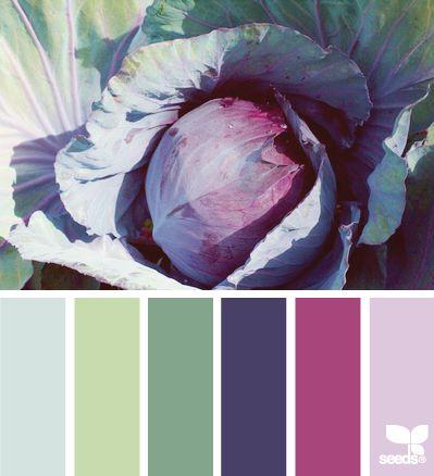 cabbage hues