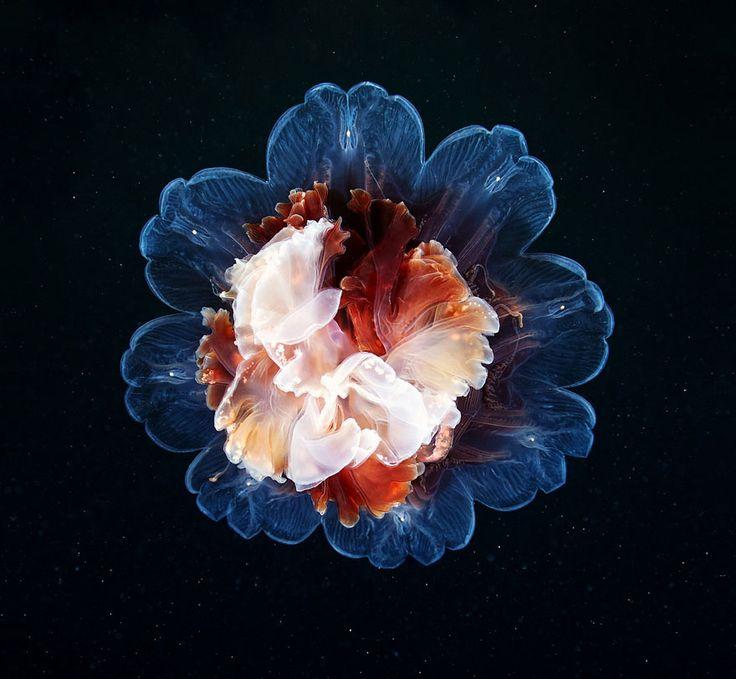 l-etrange-beaute-des-meduses-par-alexander-semenov-aquatis-3