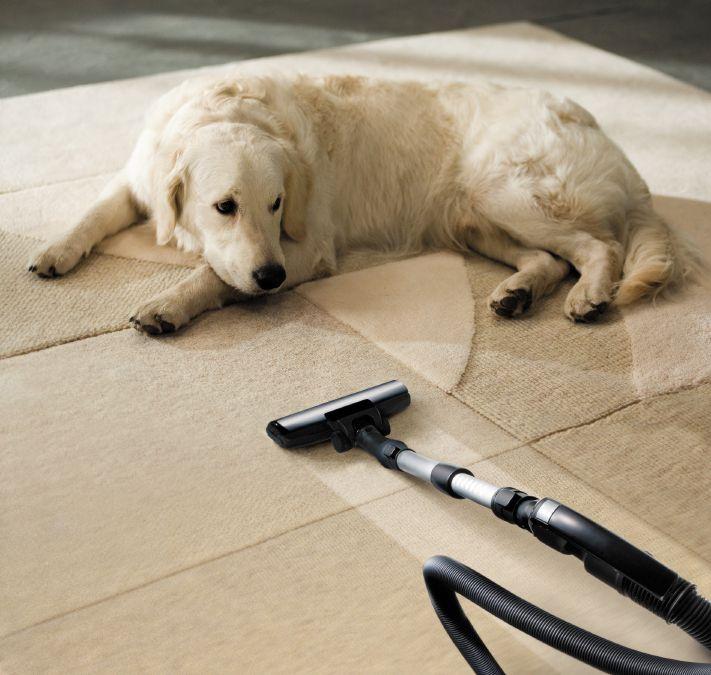 The Best Pet Hair Vacuum