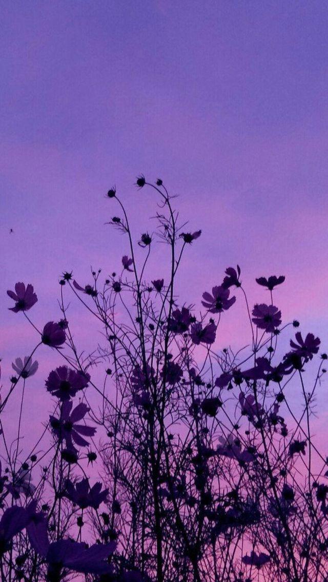 pinterest;ricoprendosj ♡ Purple wallpaper, Sky aesthetic